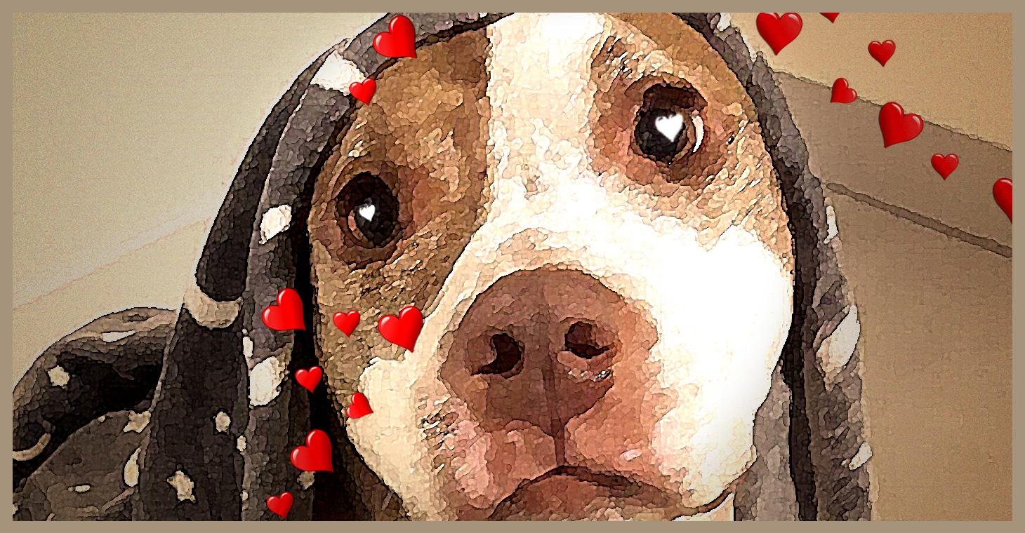 La storia di Mahè: quando l'adozione di un cane diventa una storia d'amore.