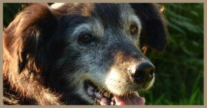 I canili sono pieni di cani adulti abbandondati. Adottiamoli!