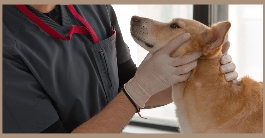 Il veterinario: una professione senza sosta!